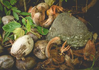 10. L'écorce de noix de coco