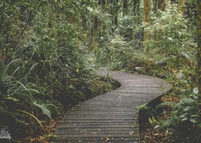 Traversée de Waipoua forest