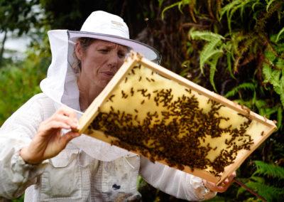 13. Contrôle de la bonne santé de la ruche
