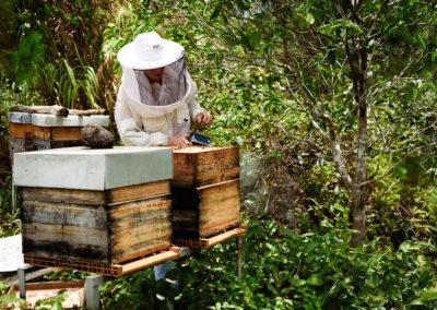 14. Le rôle de l'apiculteur