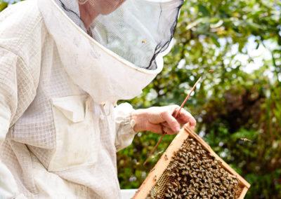 9. L'apicultrice
