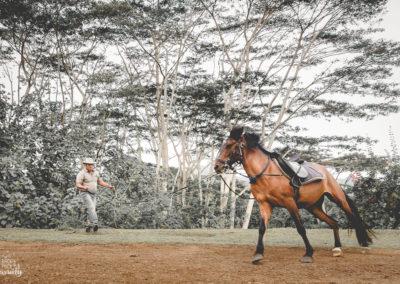 Paco & les chevaux-6