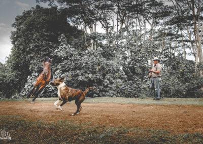 Paco & les chevaux-7