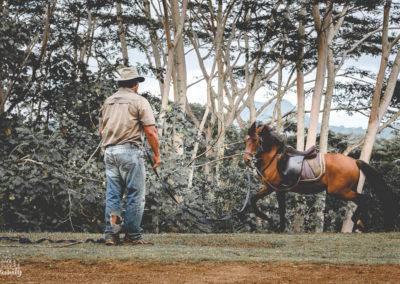 Paco & les chevaux-9