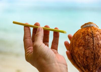 27. Les pailles du papayer