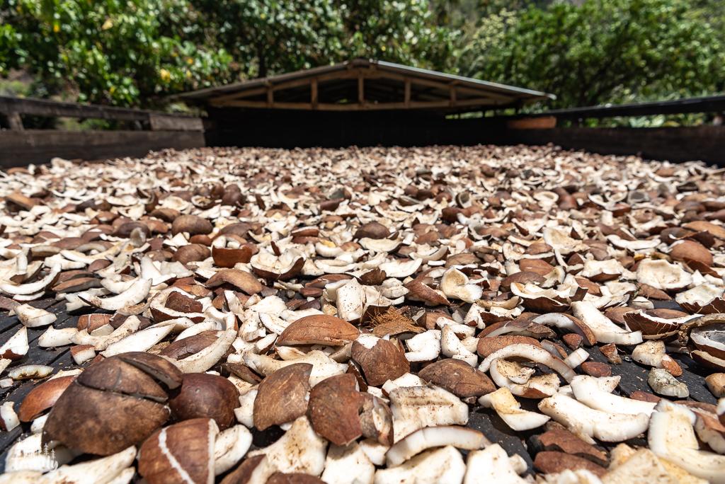 La coprah: chaires de noix de coco séchée destinée à la fabrication du monoï entre autre