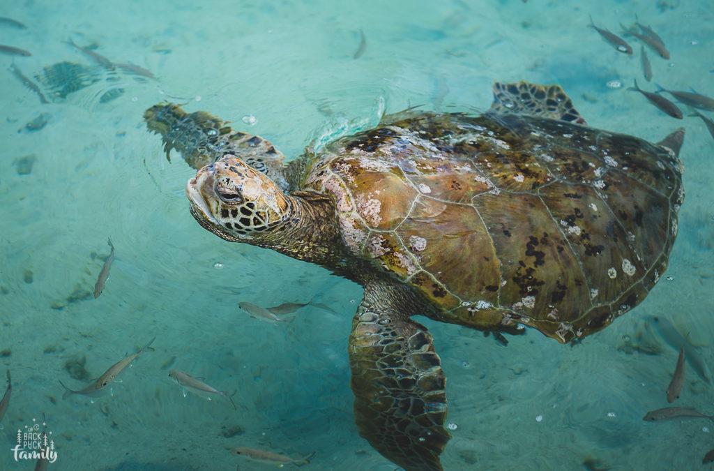 Te Mana O Te Moana : L'esprit de l'océan