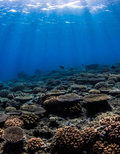 1. Le récif coralien à Tahiti