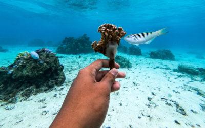 Adopter son bébé corail, un acte écologique