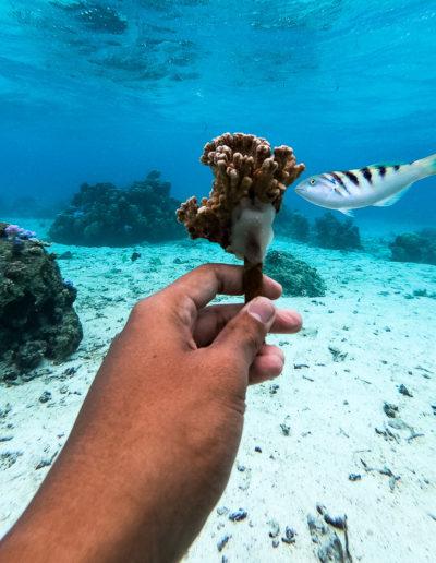 18. Nouvel habitat pour poisson