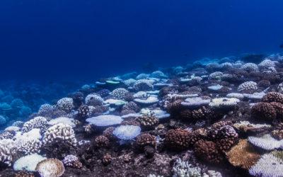 Défenseurs de l'environnement: Coral Gardeners