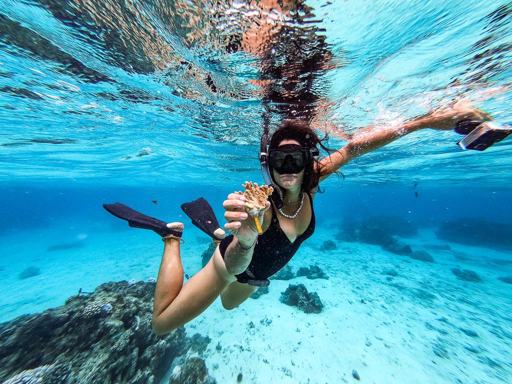 20. Présentation des boutures de coraux