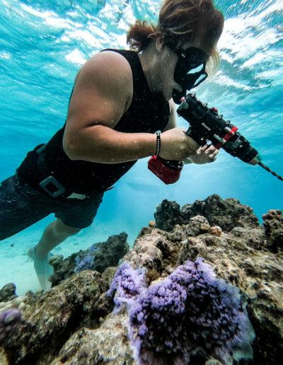 21. Plantation de corail à la perçeuse