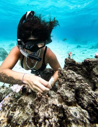 23. Mise en place de la bouture de corail