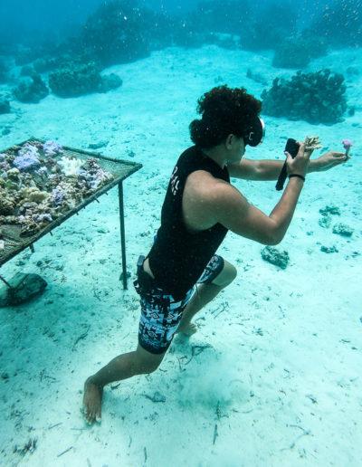 24. Le corail prend la pose